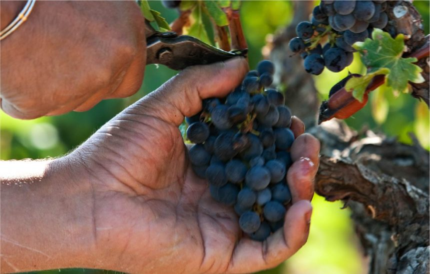 Le vignoble du domaine Bosquet des Papes -Châteauneuf-du-Pape